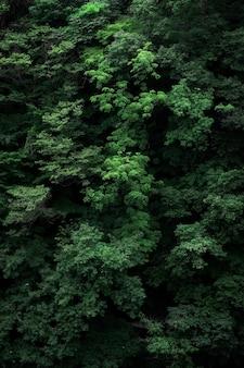 Tir vertical des branches de l'arbre vert parfait pour le fond
