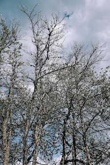 Tir vertical de branches d'arbres nus dans le parc sous un ciel nuageux