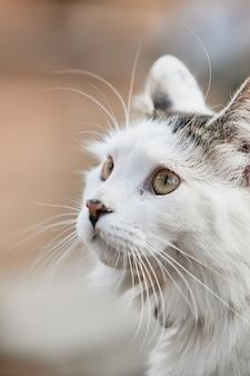 Tir vertical d'un chat blanc mignon sous la lumière du soleil
