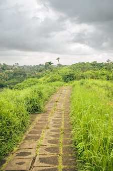 Tir vertical d'un chemin bordé d'herbes