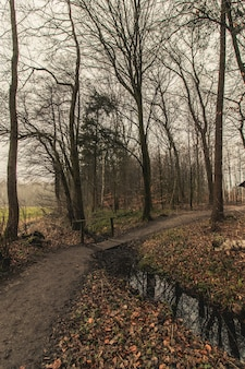 Tir vertical d'un chemin forestier dans un ciel sombre