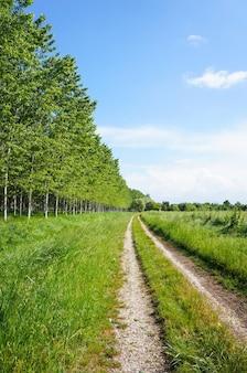 Tir vertical d'un chemin de terre avec des arbres et des champs d'herbe sur les côtés