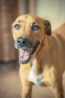 Tir vertical d'un chien brun mignon sur un arrière-plan flou