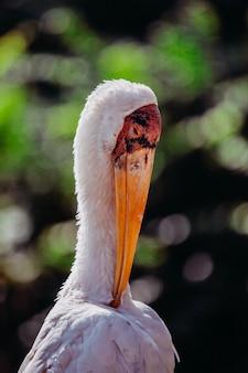Tir vertical d'une cigogne