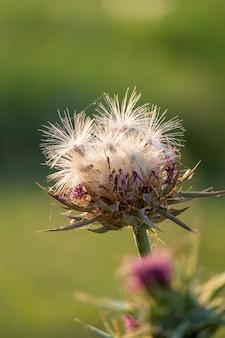 Tir vertical d'une fleur avec fond vert flou