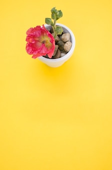 Tir vertical d'une fleur d'oeillet rose dans un petit pot de fleur, placé sur une surface jaune