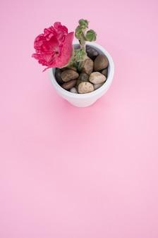 Tir vertical d'une fleur d'oeillet rose dans un petit pot de fleur, placé sur une surface rose