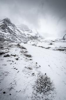 Tir vertical d'une forêt enneigée entourée de collines sous le ciel clair