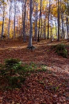 Tir vertical d'une forêt avec des feuilles tombées au sol sur la montagne