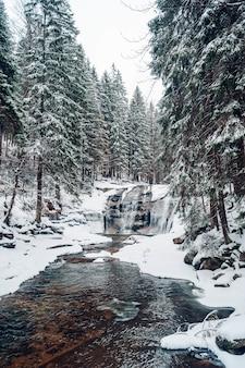 Tir vertical d'une forêt avec de grands arbres couverts de neige