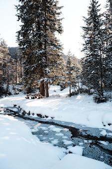 Tir vertical d'une forêt avec de grands arbres en hiver