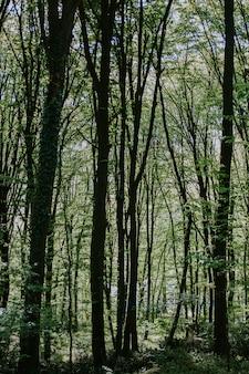 Tir vertical d'une forêt avec de grands arbres et plantes