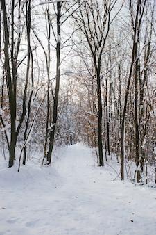 Tir vertical d'une forêt sur une montagne couverte de neige en hiver