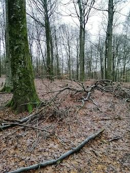Tir vertical d'une forêt pleine d'arbres de grande hauteur à larvik, norvège