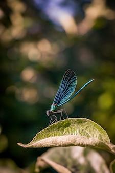 Tir vertical d'un insecte à ailes bleues assis sur une feuille