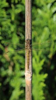 Tir vertical d'une libellule sur une branche d'arbre sous la lumière du soleil avec un flou