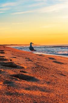 Tir vertical d'une mouette debout sur le rivage à la plage d'entrée nord