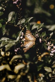 Tir vertical d'un papillon brun sur une brindille
