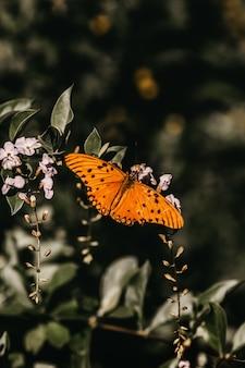 Tir vertical d'un papillon orange sur une brindille
