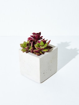 Tir vertical d'une plante d'intérieur dans un pot de fleurs en béton