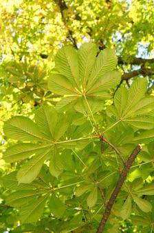 Tir vertical de plusieurs feuilles vertes sur une branche