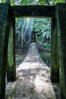 Tir vertical d'un pont dans une jungle tropicale