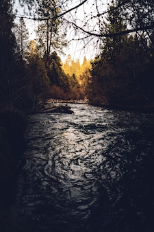 Tir vertical d'une rivière parmi les arbres dans une forêt pendant la journée