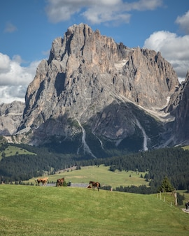Tir vertical de seiser alm - alpe di siusi avec de larges pâturages et chevaux à compatsch italie