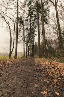 Tir vertical d'un sentier forestier avec un ciel sombre