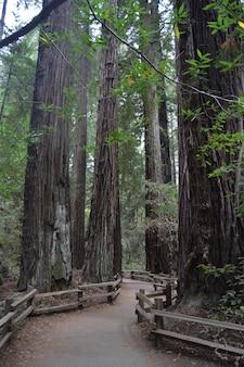 Tir vertical d'un sentier sinueux au milieu de grands arbres dans la forêt
