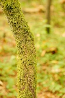 Tir vertical d'un tronc d'arbre