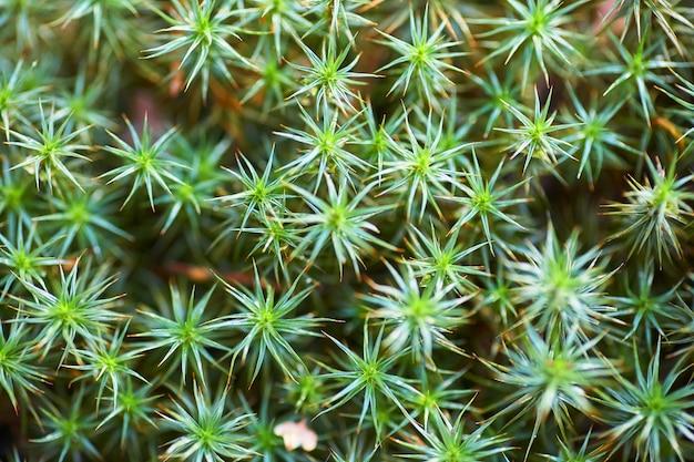 Tire des herbes jeunes et brillantes, des plantes.