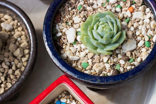 Tiré de pots avec de petits cactus,