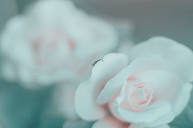Tissu coloré avec des fleurs roses pour le fond