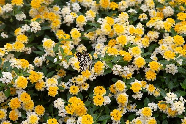 Tissu de fleur d'or