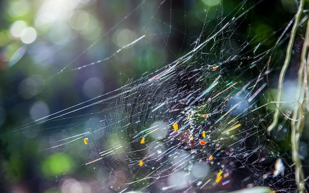 Toile d'araignée sur les branches d'arbres au soleil dans la forêt d'été