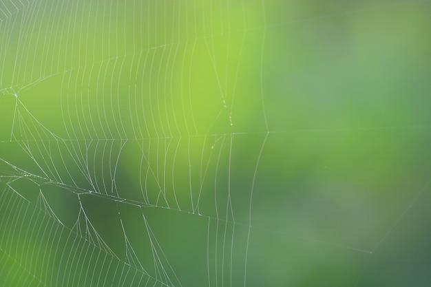 Toile d'araignée avec fond de nature verte