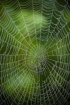 Toile d'araignée avec des gouttes d'eau