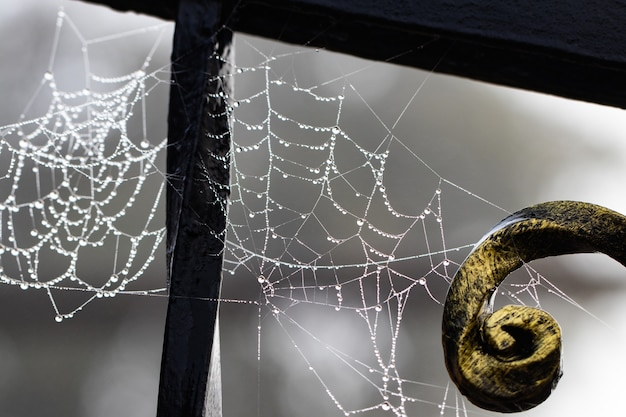 Toile d'araignée avec des gouttes de pluie sur une construction en métal forgé.