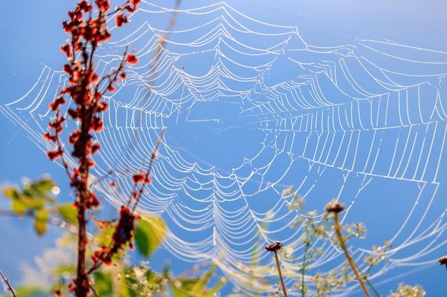 Toile d'araignée avec des gouttes de rosée sur fond de plantes contre le ciel bleu