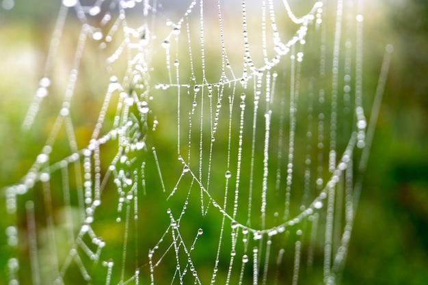 Toile d'araignée avec gouttes de rosée un matin d'été