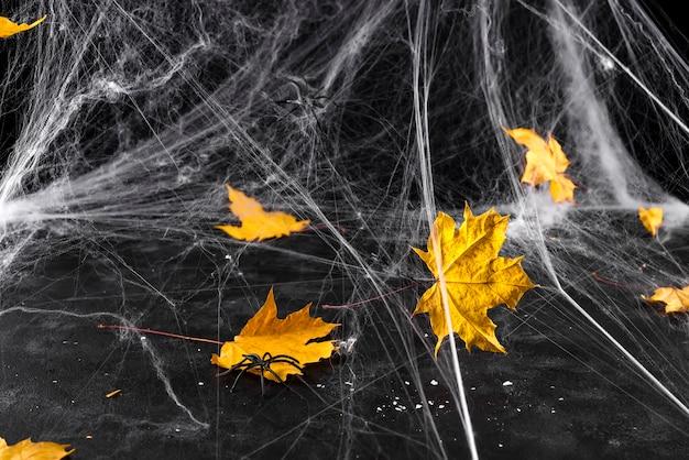 Toile d'araignée ou toile d'araignée sur fond noir