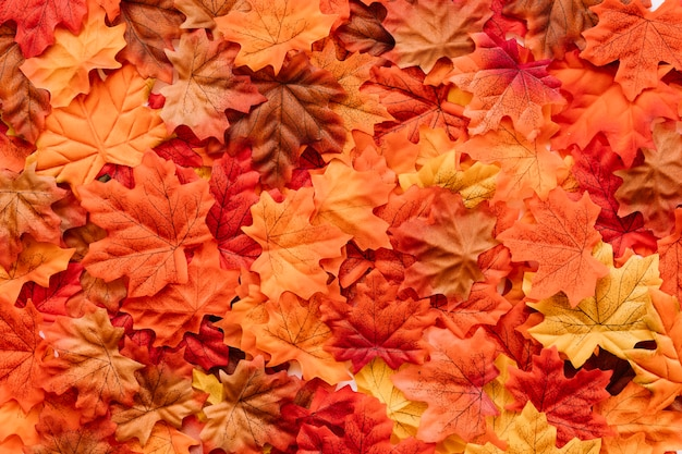 Toile de feuilles tombées