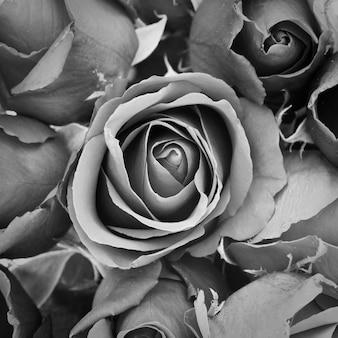 Toile de fond belle novembre bouquet de fleurs