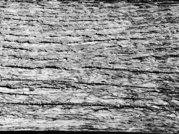 Toile de fond texturée de tronc d'arbre monochrome