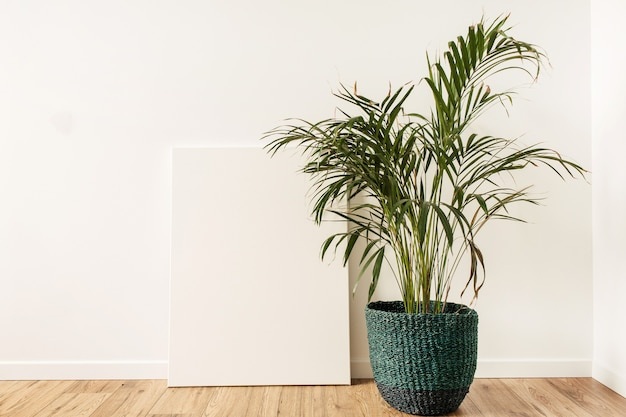 Toile vierge avec espace de copie de maquette vide. accueil plante palmier tropical en pot de rotin