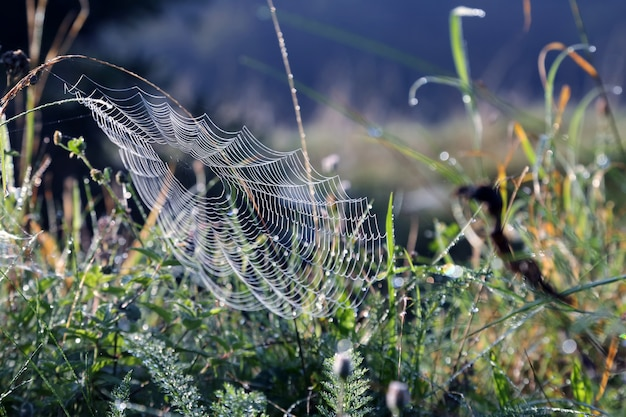 Toiles d'araignées le matin l'herbe