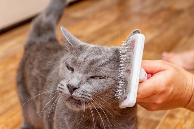 Toilettage brossage gris chat assez mignon avec une brosse spéciale pour le toilettage des animaux de compagnie concept de soins