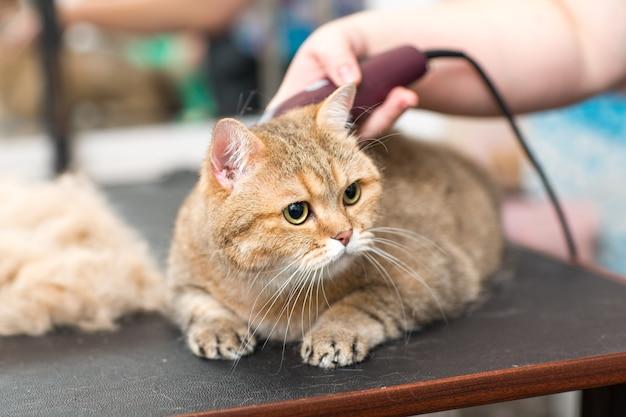 Toilettage de chats et d'animaux dans un salon de beauté.