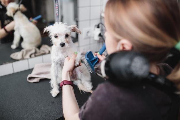 Toilettage de chiens et de petits animaux dans le salon de toilettage photo de haute qualité